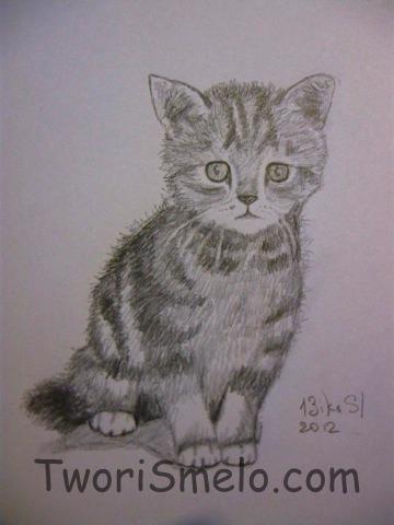 как рисовать котёнка карандашом: