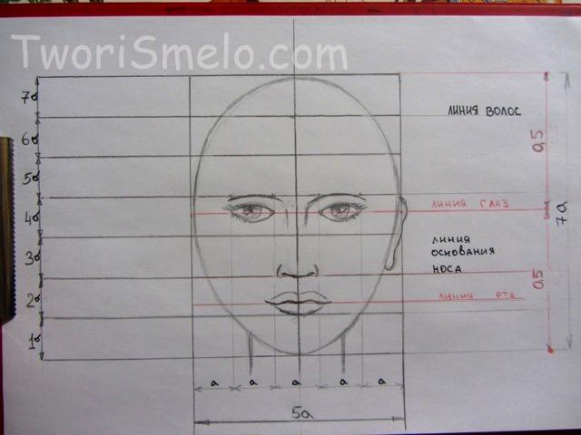 пропорции головы человека, размеры
