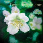 Как нарисовать цветок жасмин