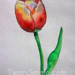 Как нарисовать тюльпан, карандаш+акварель