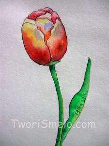 как нарисовать тюльпан карандашом и акварелью