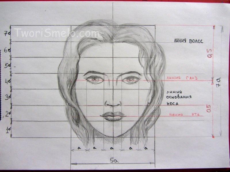 пропорции головы человека в уроке рисования